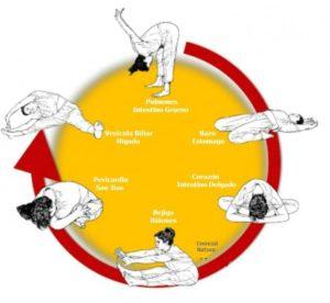 Meridiaan-yoga cursussen - Shiatsu Masunaga Amsterdam